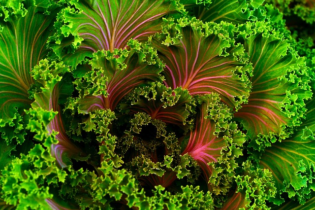 leafy greens - vegetables